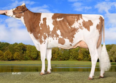 Wilder Smile Red VG-85-DE 2yr.