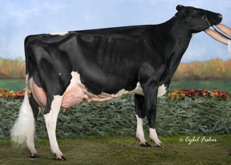 Same family: Winterbay Goldwyn Lotto EX-95-USA