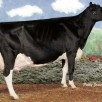 Same family: Idee Lustre EX-95-USA - Grand Champion Royal 2002