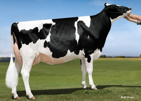 Our-Favorite Unlimited EX-94 96-MS