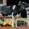 Full sister to dam: 1st WDE '18: Kingswasy Doorman Andrea EX-91-USA