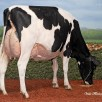 Grand dam: Kingsway Sanchez Arangatang EX-95-USA