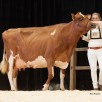 Twente Dairies Jose 421 EX-93-NL (s. Wisconsin) - 2nd place HHH-Show 2017