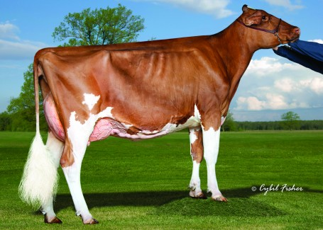 Westcoast Absolute Roulette-Red EX-92