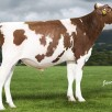 Brother: OH DG Rubels-Red | #1 GTPI R&W sire in the breed // +2733 GTPI
