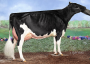 Grand dam: MS Gold Brooke EX-91-USA
