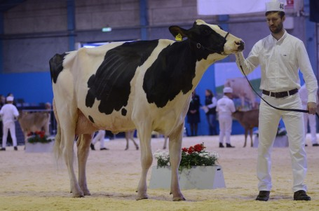 Engelkes Gold Chip Georgie EX-91-DK EX-93-MS @ Danish national show 2019