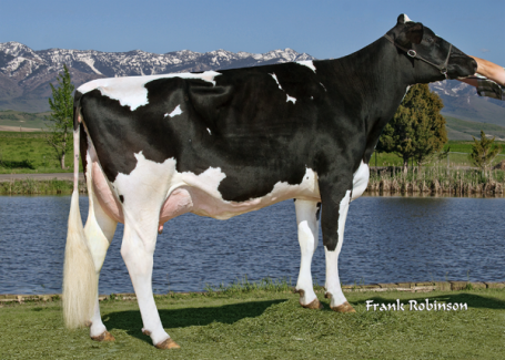 GGGD: Pine-Tree Sharla Daphne VG-88-USA