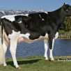 Grand dam: Pine-Tree Sharla Daphne VG-88-USA