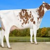 Sister to grand dam: Wilder Koenigin Red VG-86-DE