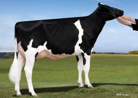 Dam: Hahncrest Atw Danica-ET VG-89-CAN EX-91-MS 4yr.