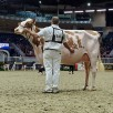 Maternal sister: Blondin Avalanche Darleen-Red VG-87-CAN 2yr. - 1st place Milking Yearling R&W Royal Winter Fair 2019