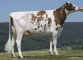 Destiny-Red VG-87-DE