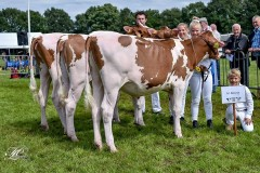 Res. Champion R&W Herd Group - Summer Show Beilen 2017