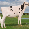 #4 PTAT heifer: Archrival Arianne