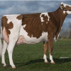 BTS Avea-Red | grand dam of the #3 GTPI R&W heifer in Europe